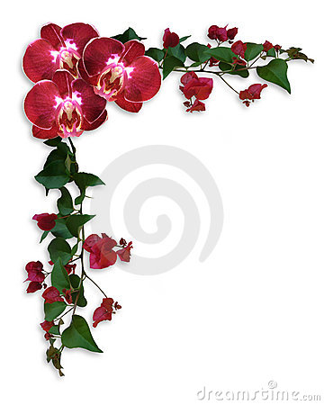 Free Orchids And Bougainvillea Red Floral Border Stock Photography - 13555092