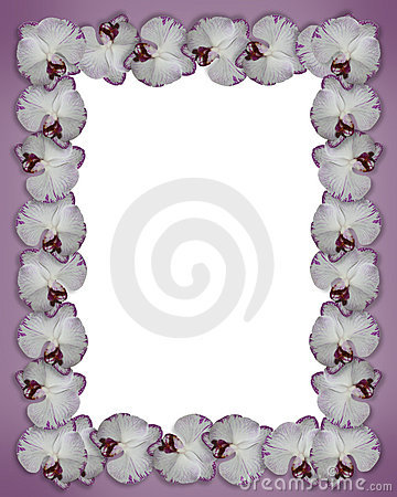 Orchids border purple