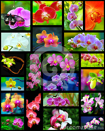 Orchids collage