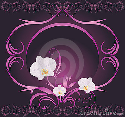 Orchids in the decorative frame