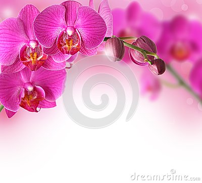 Orchids flowers border