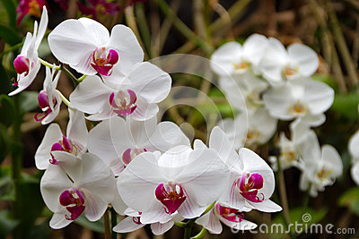 Orchids in Loro Park