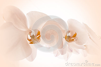 Orchids on pink background.
