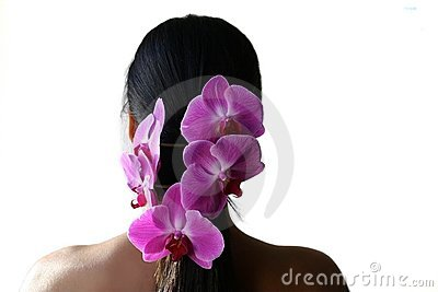 Orchids and pony tail