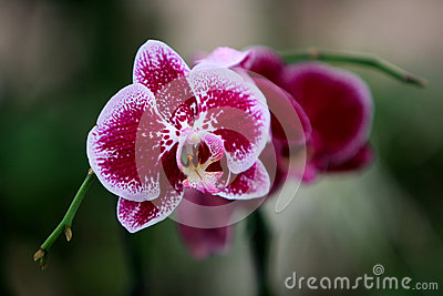 Orchids of Utopia Park.