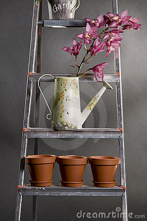 Orchids in watering can  on a metal stepladder