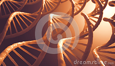 Ordre d ADN