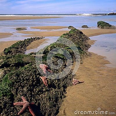 Oregon Coast and Shoreline