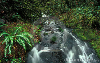 Stream Forest Waterfall