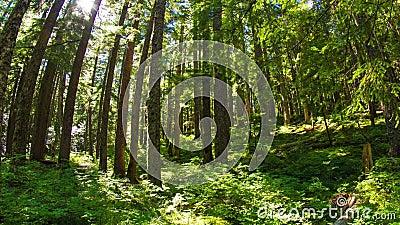 Oregon frodig skog 645 arkivfilmer