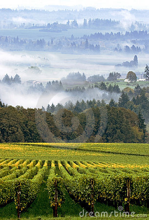 Free Oregon Vineyard In Early Morning Fog Royalty Free Stock Image - 1939286
