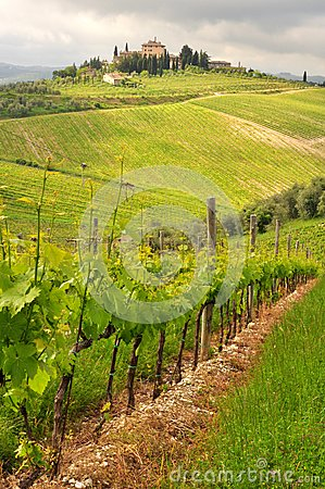 Organic Agriculture In Tuscany , Italy Stock Photos ...