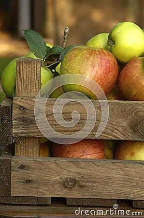 Free Organic Apples Royalty Free Stock Image - 1244866