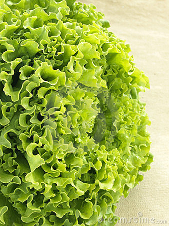 Organic batavia