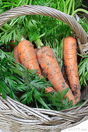Organic carrots in basket