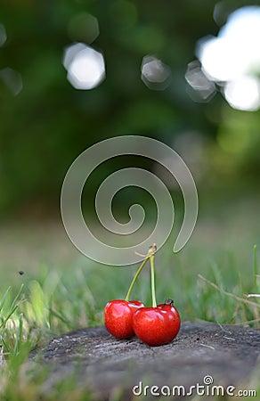 Organic Cherries on wood