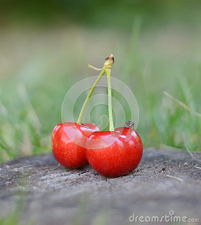 Organic Cherries on wood