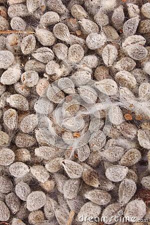 Free Organic Cotton Seeds.background. Stock Photos - 46748363