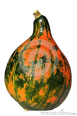 Organic edible gourd