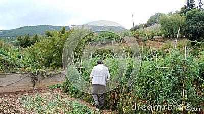 Organic Farmer Editorial Image
