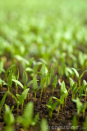 Free Organic Farming Stock Images - 13736384