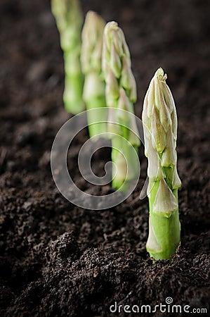 Free Organic Farming Asparagus Stock Images - 19974254