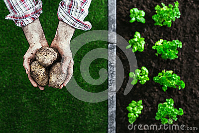Organic farming and gardening Stock Photo