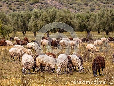 Organic Farming In Greece Stock Photo - Image: 52644658