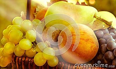 Organic fruits - autumn fruits