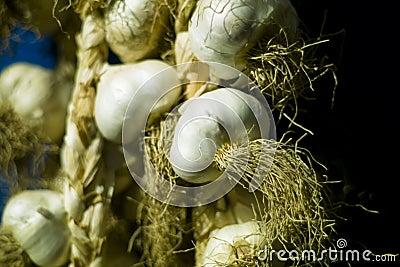 Organic garlic (Allium sativum)