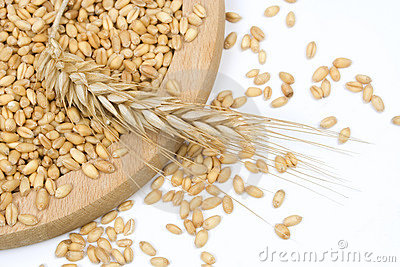 Organic grown wheat