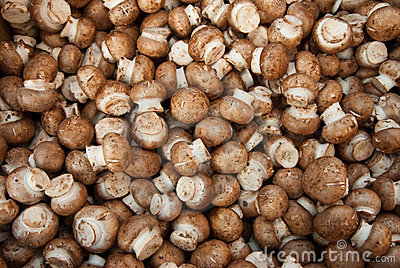 Organic miniature shitaki mushrooms