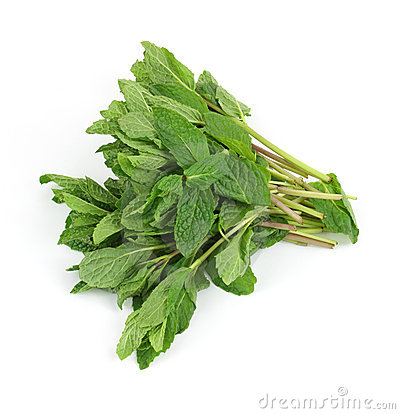 Organic mint herb bunch
