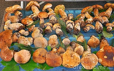 Organic mushroom market