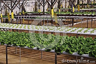 Organic Plantation