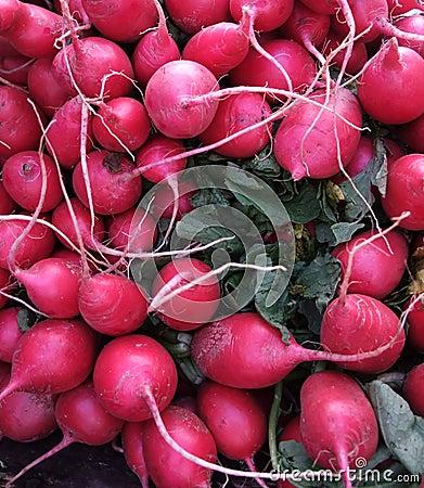 Organic Red Radishes