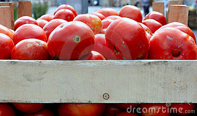 Organic tomatoes on a market stall