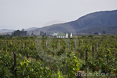 Organic Vineyard & Farmhouse - Wider Angle