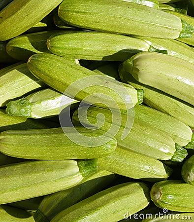 Organic Zucchini Squash