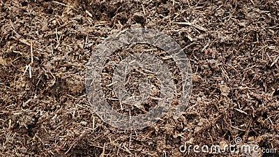 Organisches Düngemittel - Kompost oder Humus Ökologisch reines Düngemittel stock video