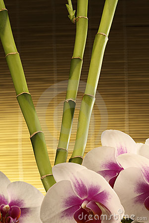 Oriental Spa Elements