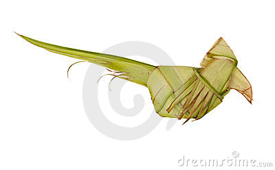 Origami parrot from coconut leafs isolated