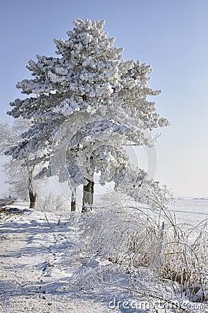 Free Original Christmas Tree Royalty Free Stock Photo - 18161015