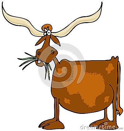 Original Texas longhorn