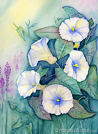 Original Watercolor - Flowers - Morning Glories