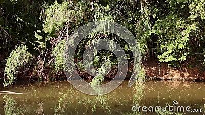 Orilla del río almacen de video