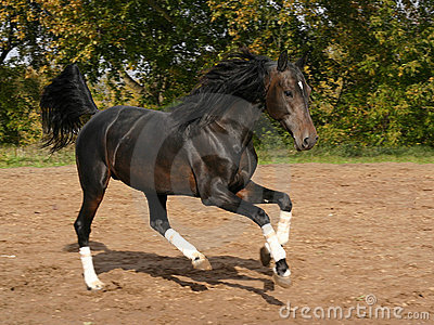 Orlov trotter on the move