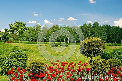 Ornamental garden with green lawn