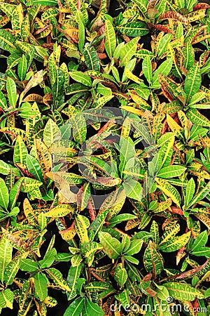 Ornamental green