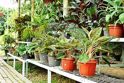Ornamental plants shop